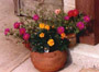 garden planters clay pots home accessories Arizona souvenirs gifts flower pots